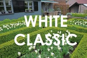 WHITE CLASSIC